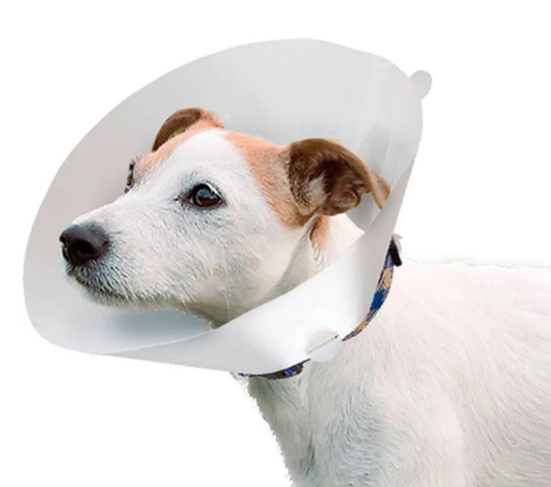 Собака после операции. Уход.