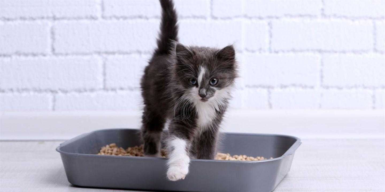 Анализ мочи собак и кошек